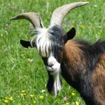 Goats In The Pulpit; SBC & FBC Orlando Promote Apostasy (Part 2)